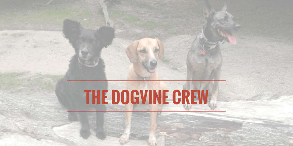 THE DOGVINE, THE PLACE FOR ALL LONDON DOG TALK
