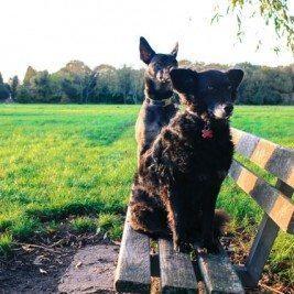 Putney Park Dog Friendly
