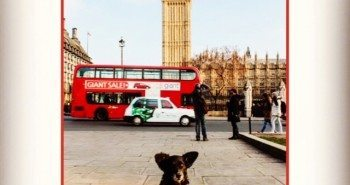The Dogvine does Big Ben