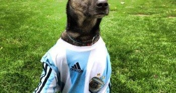 Dress Up Your Pet Day - Argentina
