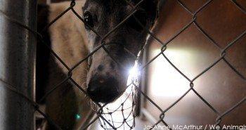 Wimbledon Greyhound Racing