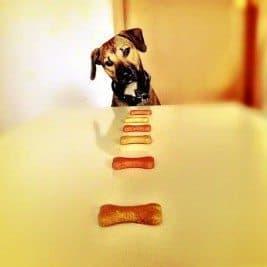 International Dog Biscuit Appreciation Day