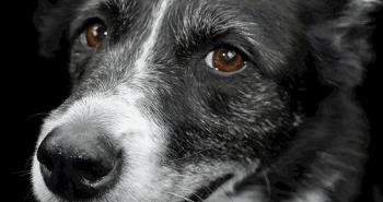 February Pet Holidays and Awareness Days