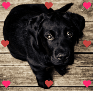 Valentine's Day Gifts For Dog Lovers