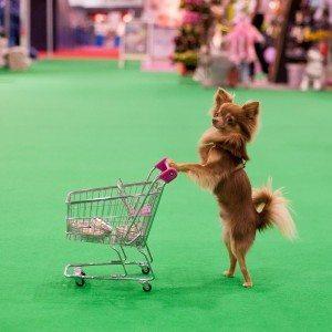 The London Pet Show - Dancing Dog