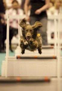 The London Pet Show - Dog Agility