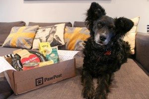 Pawpost Monthly Pet Box - Belinha the Product Tester