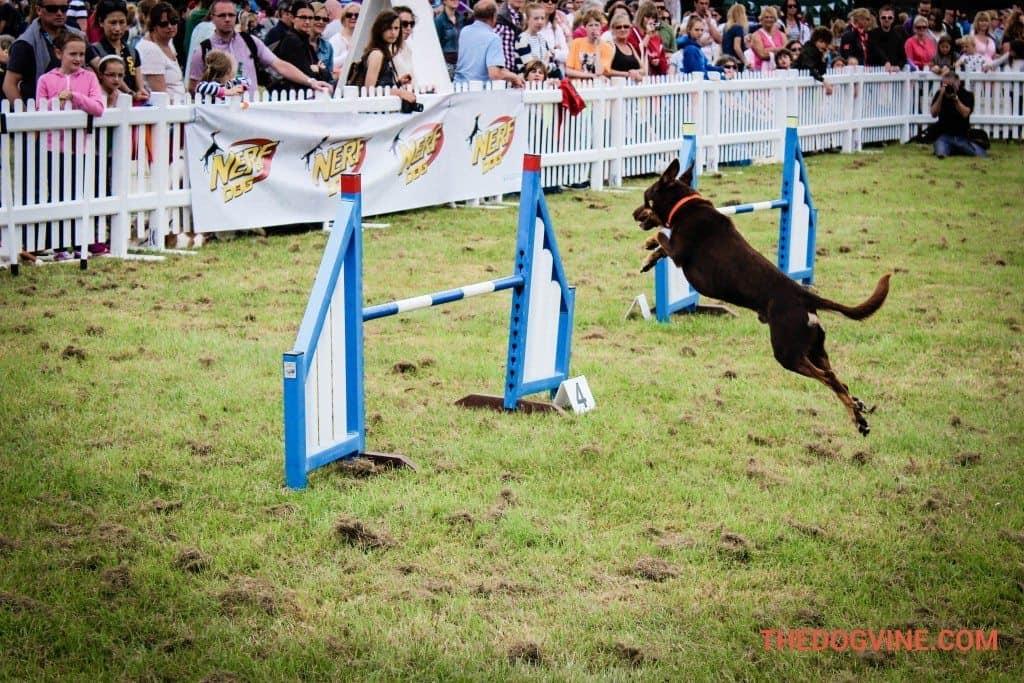 Dog Agility DogFest 2015