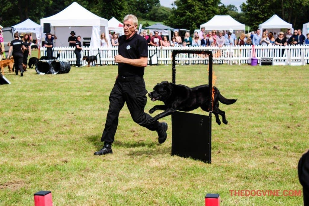Conquest K9 Display Team  DogFest 2015