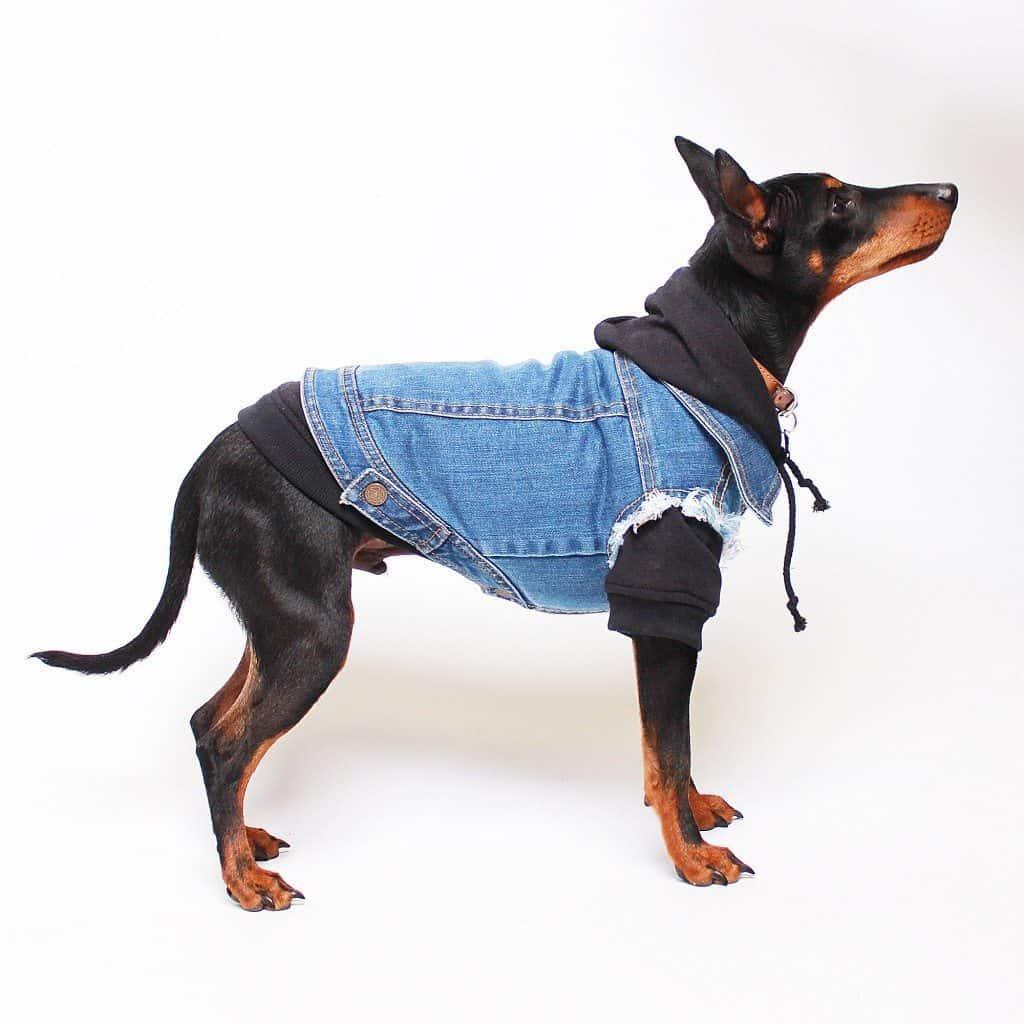 Leadthewalk.com - Pethaus-Denim-Dog-Vest