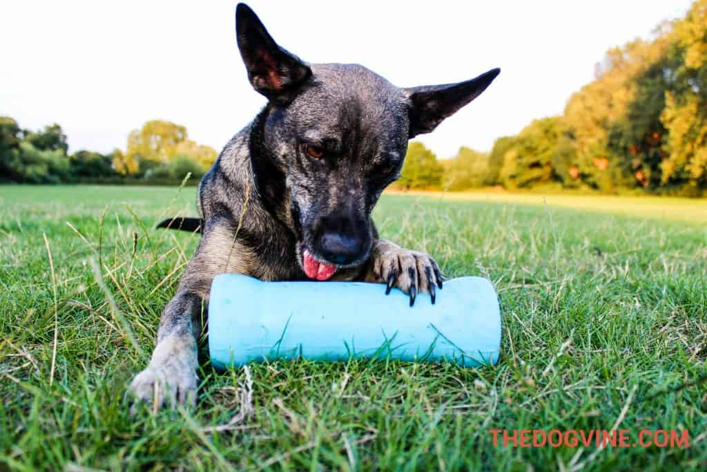 Crinkit dog Toy