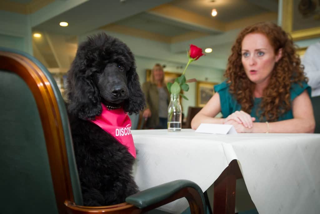 September 19th 2015 London Animal lovers attend puppy speed dating at the Kennel Club HQ as a tester for this year's Eukanuba Discover Dogs show , taking place at the ExCel Exhibition Centre on the 17th and 18th of October.