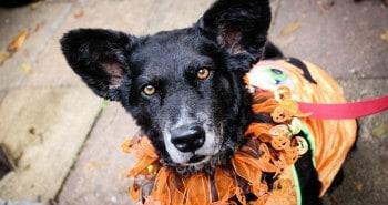 Hounds of Halloween- All Dogs Matter Halloween Walk 2015