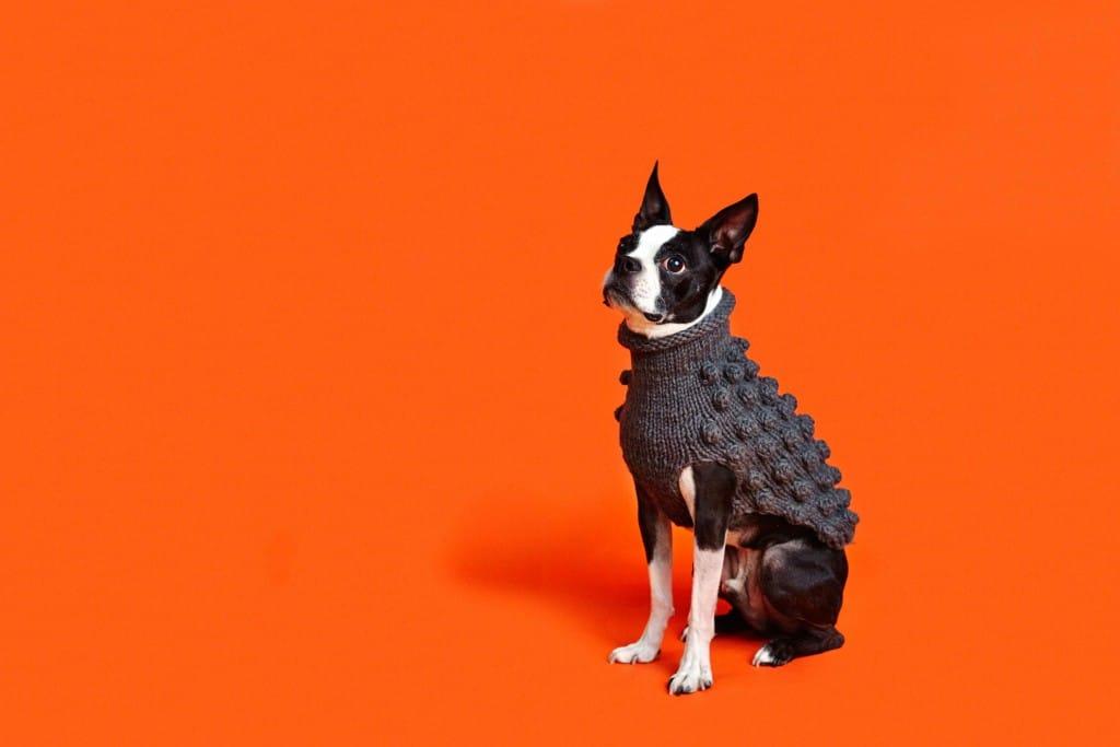 Lead The Walk's Pup Up Boutique @ Stylist Live