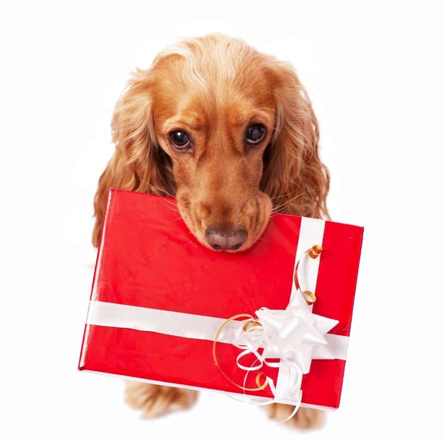 DogFest Tickets - Christmas Gifts For Dog Lovers