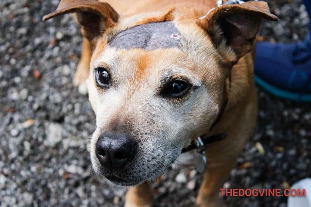 Bailey - Dog Factor 2016