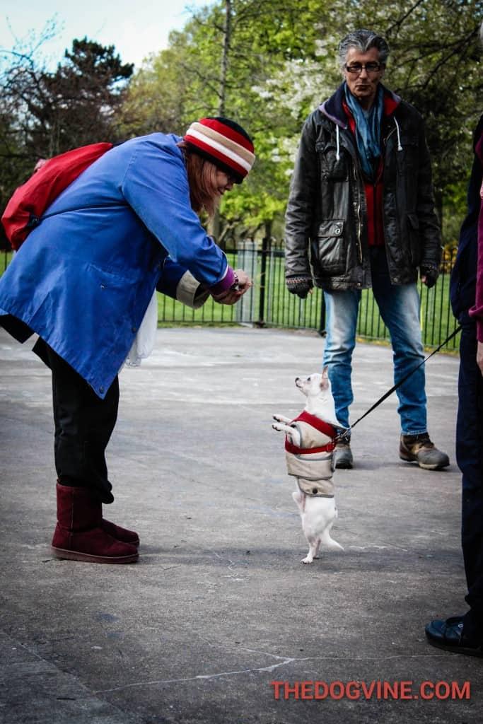 Pepe- Dog Factor 2016