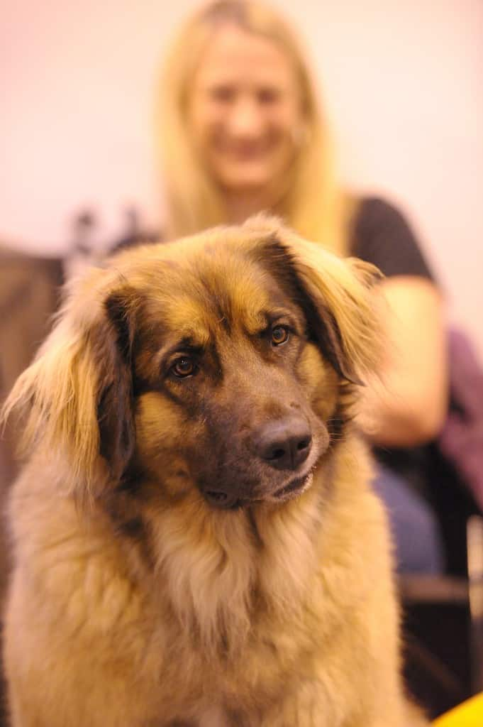 National Pet Show London 2016 - Dog