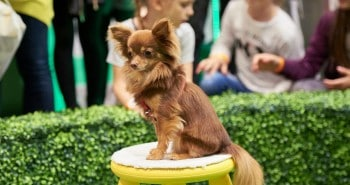 Win Tickets to The National Pet Show London & 4 Reasons to Go