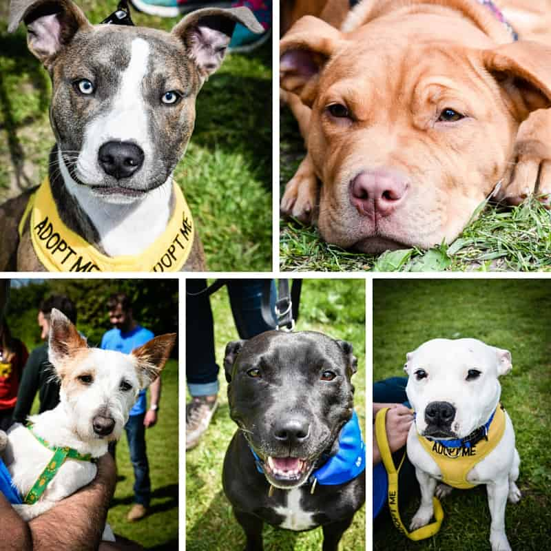 All Dogs Matter Great Hampstead Bark Off - Best Adopt Me Faces