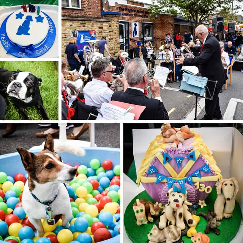 The Mayhew Animal Home Open Day (1)