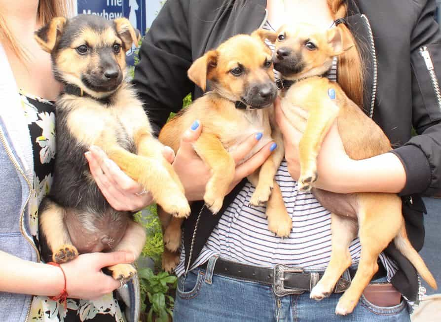 4 Of The Cutest Pups Who Need A Forever Home - Jimmy, Sandy, Tom (L-R)
