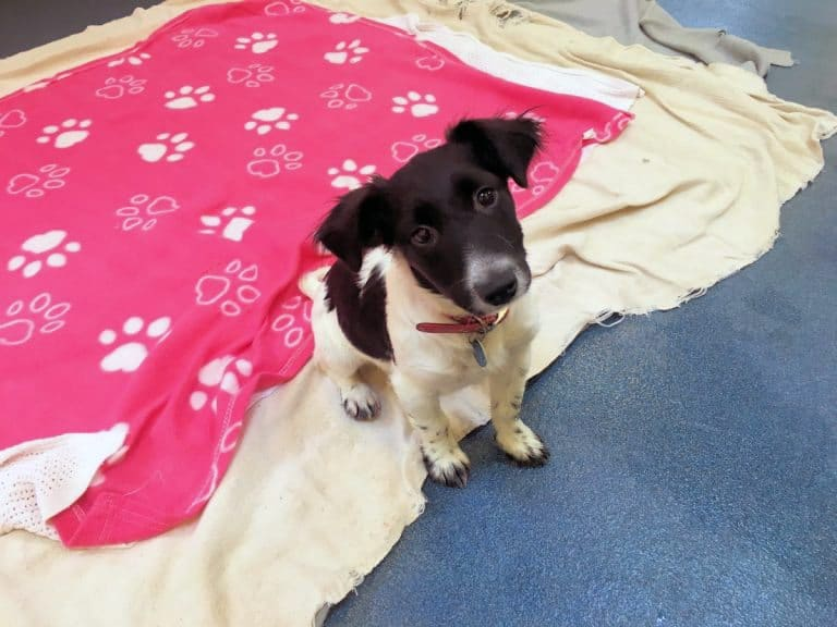 4 Of The Cutest Pups Who Need A Home - Moe