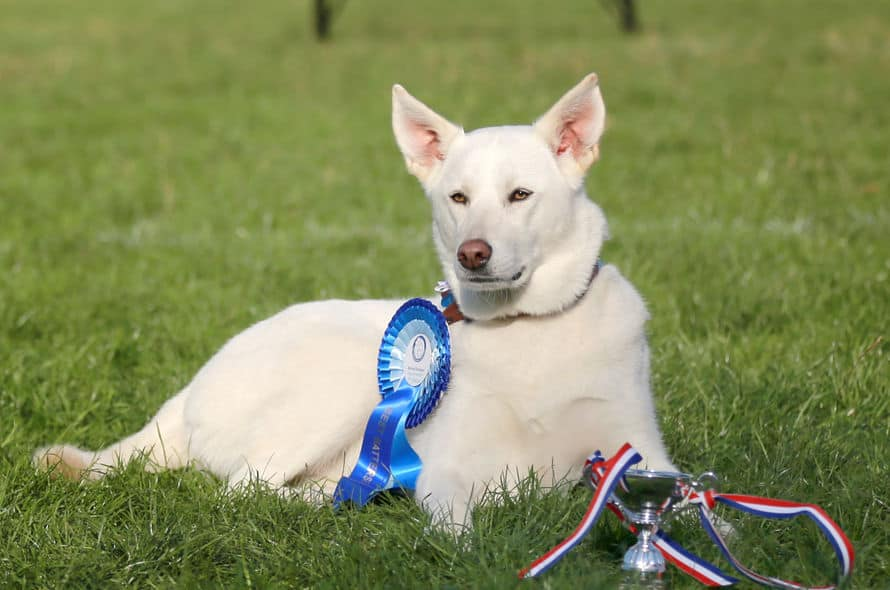 Battersea Annual Reunion & Fun Day - September Dog Events