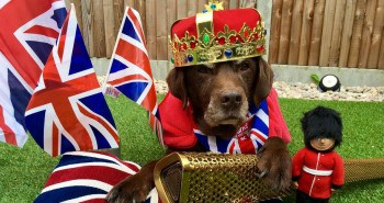 Dog Save The Queen- 9 Products For The Patriotic Pooch