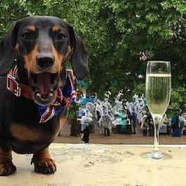 Instagram dogs Celebrating the Queens Birthday