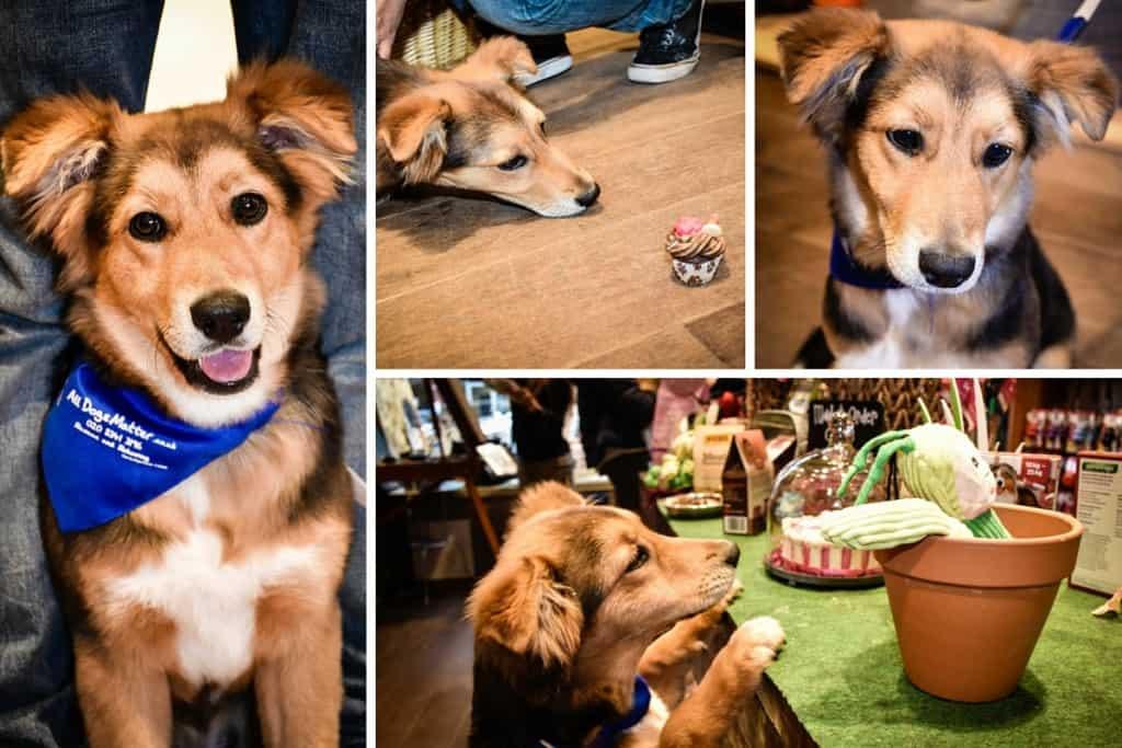 Kara - All Dogs Matter London Dog Rescue