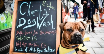 London Dog Rescue - Barkers of Muswell Hill