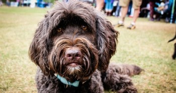 4 London Dog Events Your Dog Will Love This Month