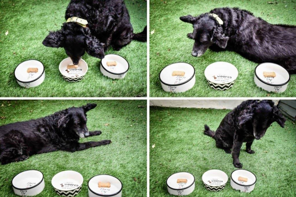 Belinha - Wellybix Dog Biscuits