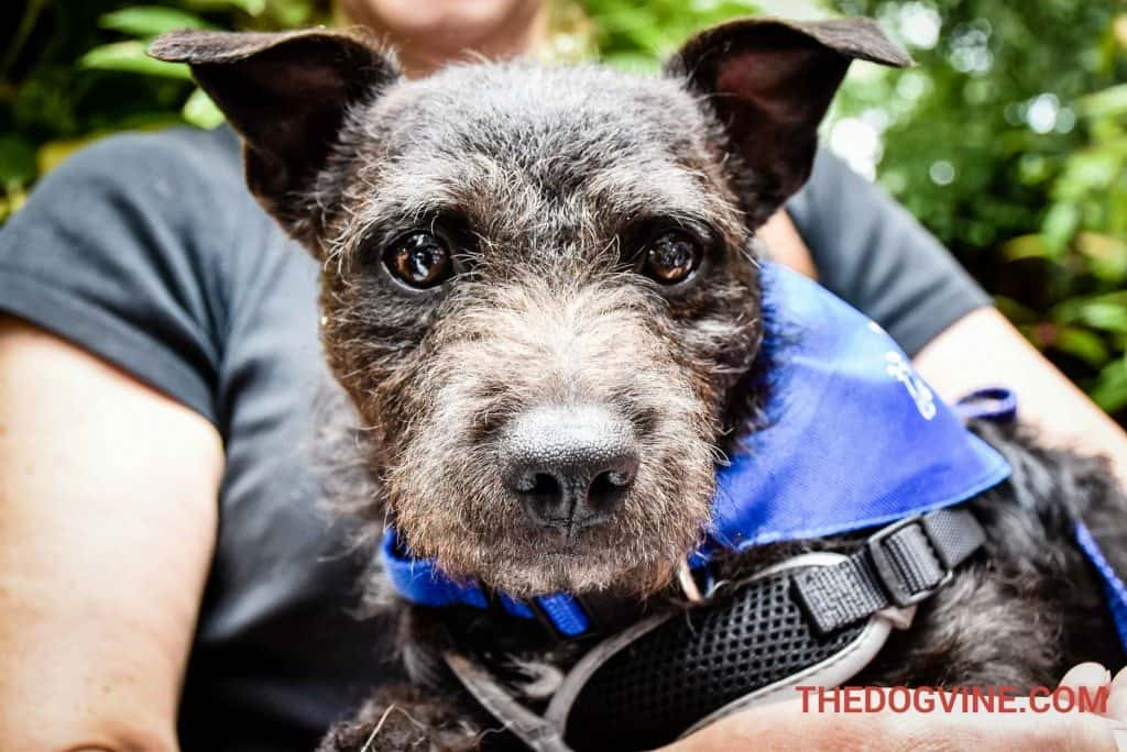 Fergus - Pup Idol 2016