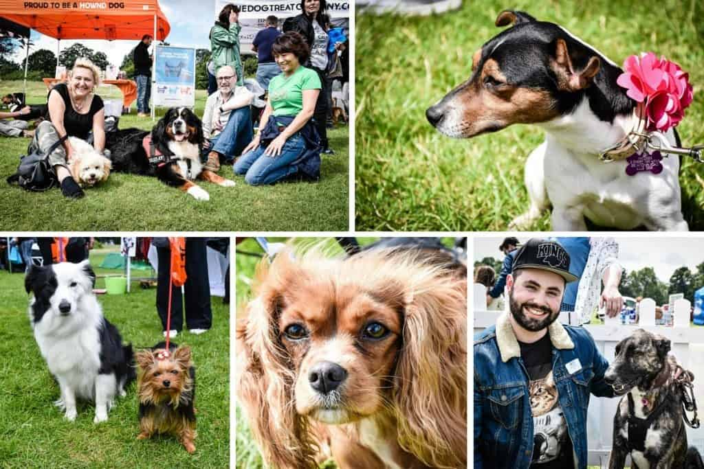 Hyde Heath Dog Show