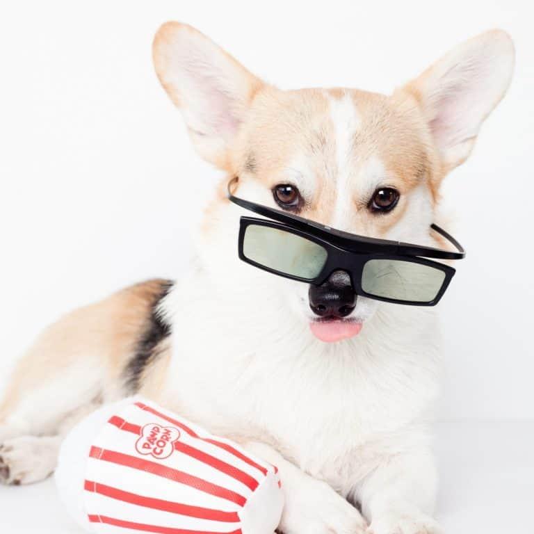 Winny The Corgi - September Dog Events
