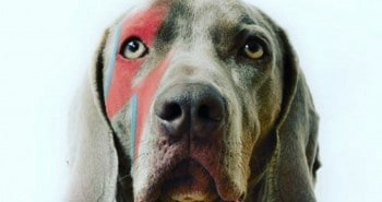 4 London Dog Events In August For You & Your Dog