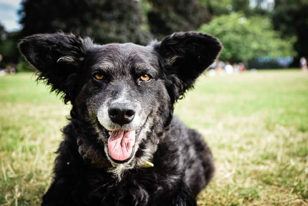 Whats On Woofs - September Dog Events Belinha