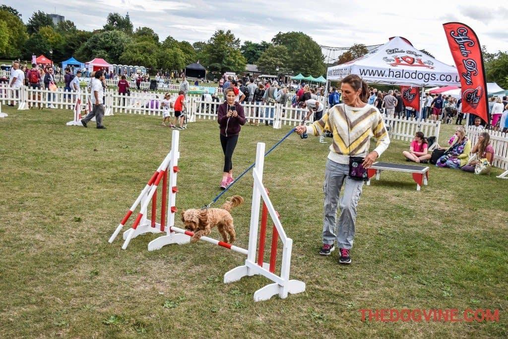 Pup Aid - Dog Agility
