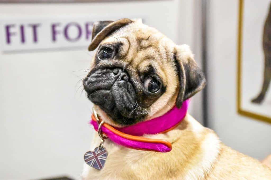London Dog Events - Discover Dogs