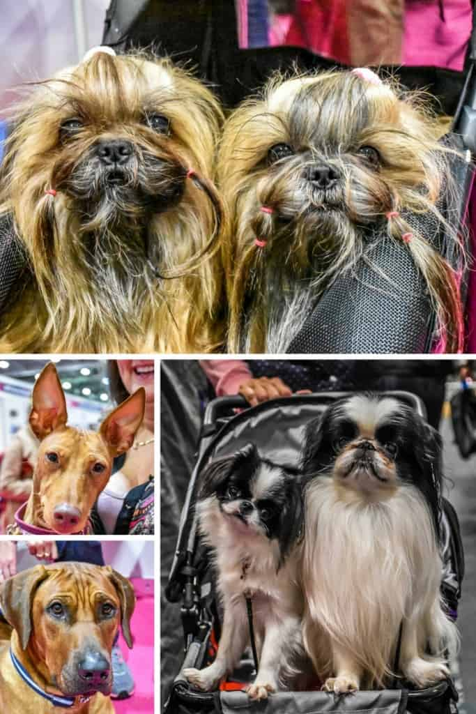 discover-dogs-2016-dog-breeds-2