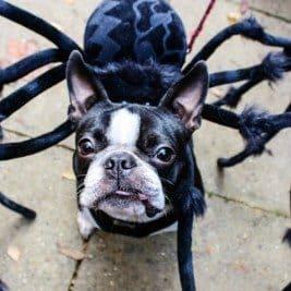 fb-october-dog-events