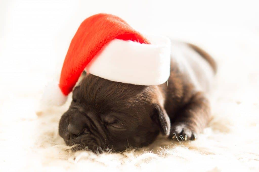 7 London Dog Events For Christmas That Do Good