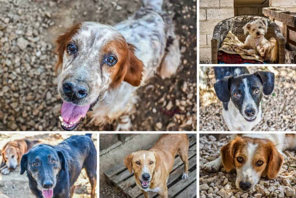animal-rescue-kefalonia-13-1