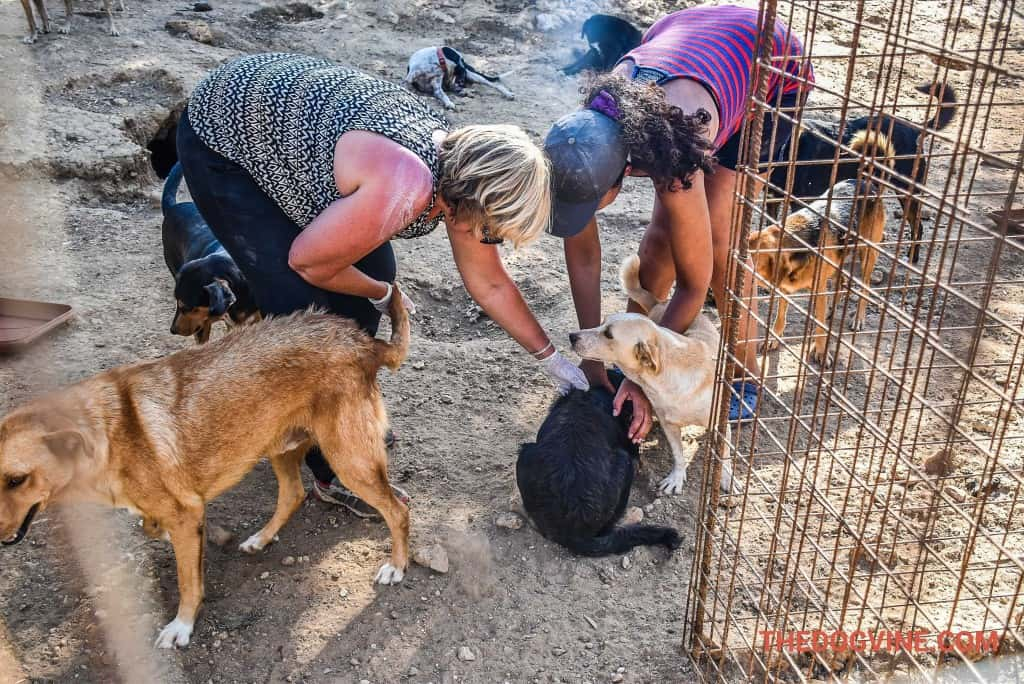 animal-rescue-kefalonia-2