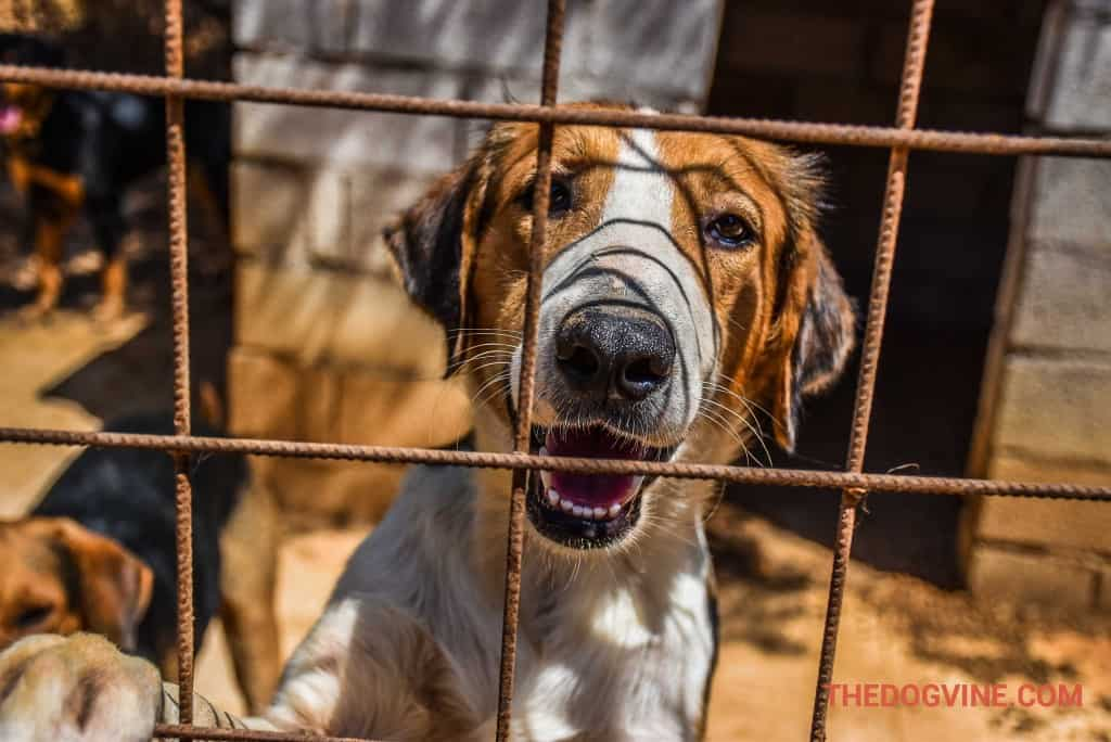 animal-rescue-kefalonia-4