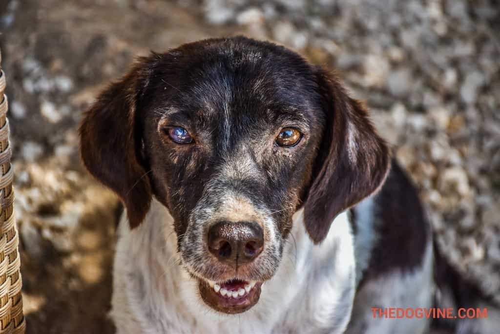 animal-rescue-kefalonia-7