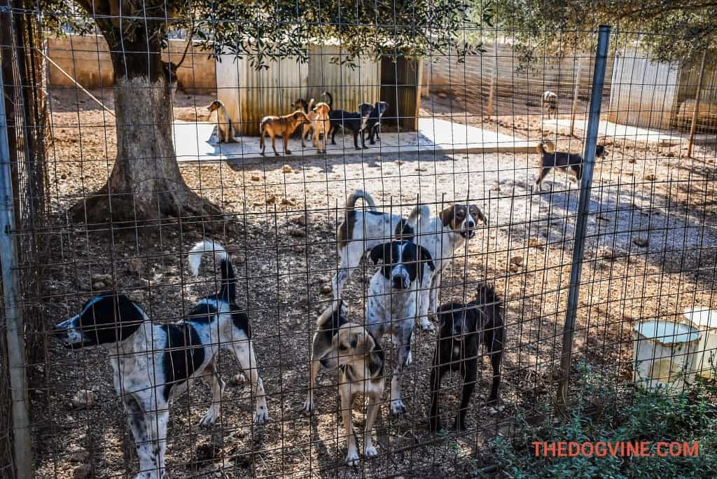 animal-rescue-kefalonia-dog-pen