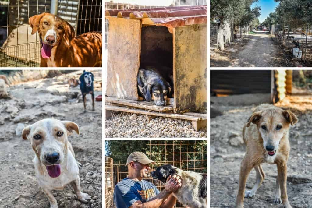 animal-rescue-kefalonia-14